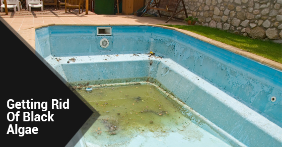 7 tips to get rid of black algae ferrari pools for Kill black algae swimming pool