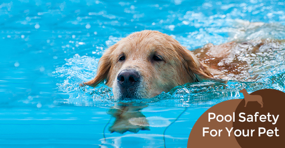 Pool Safety For Your Pet