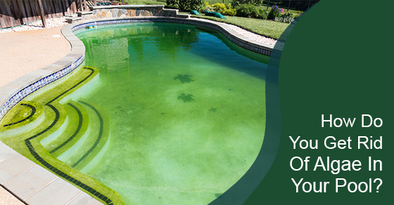How Do You Get Rid Of Algae In Your Pool?